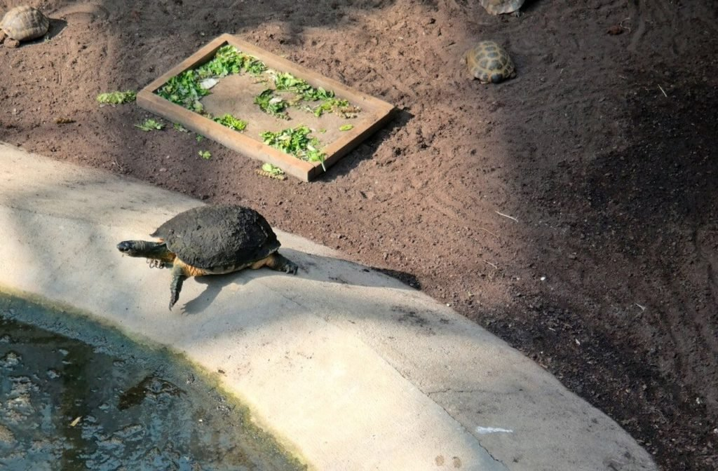 lifestyle_blog_tierpark_berlin_7