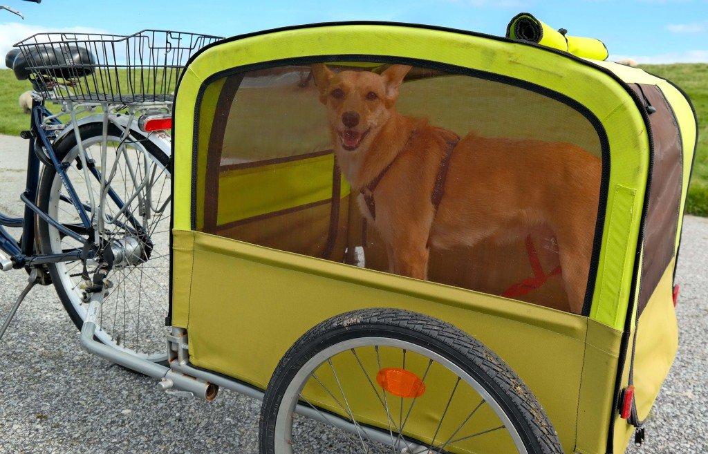 Fahrrad mit Hundeanhänger