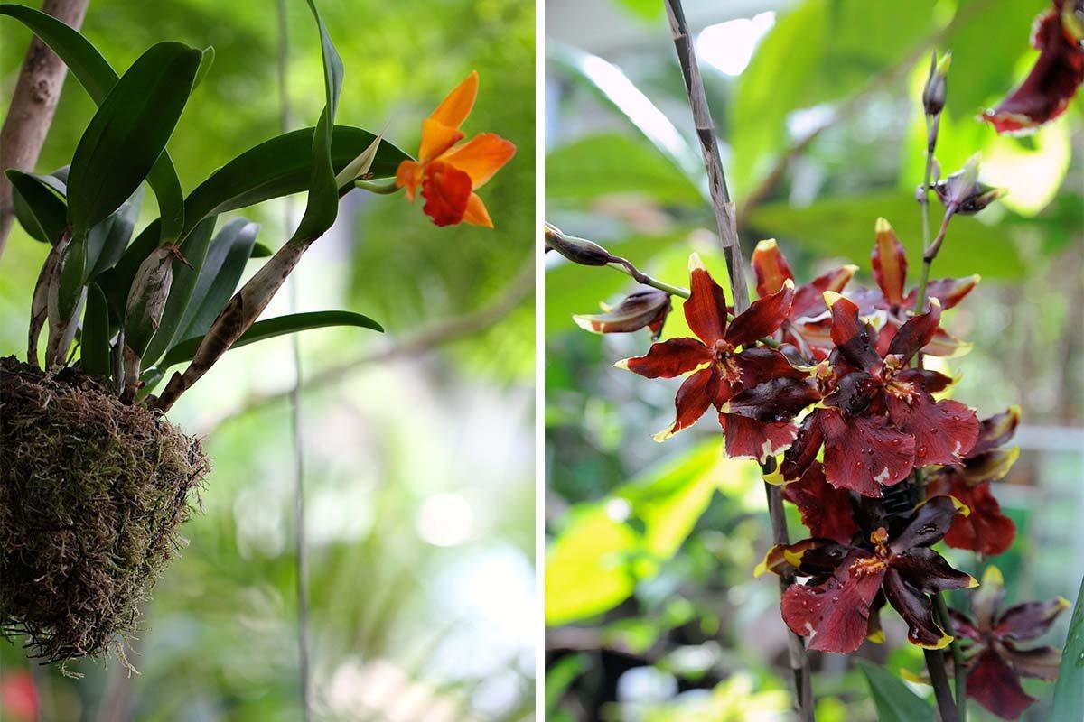 Ausflugstipp + Gewinnspiel // Orchideenblüte in der Biosphäre Potsdam