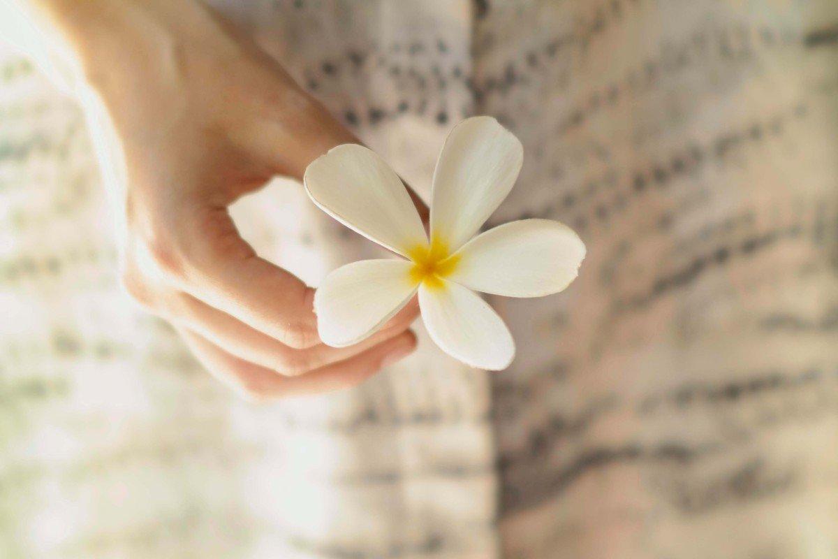 Teaserbild mit Blume