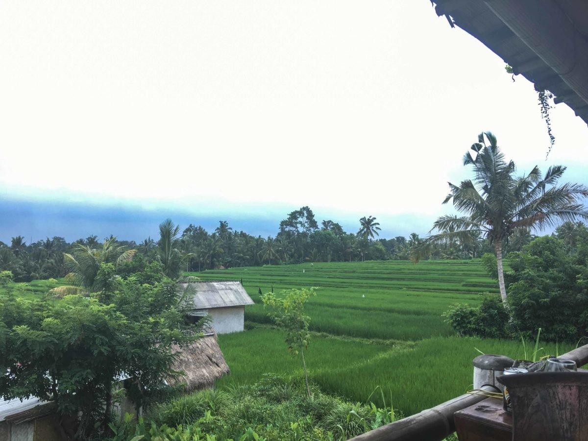 Ausblick Sari Organic in Ubud