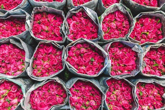 Rosen auf dem Flower Market in Bangkok