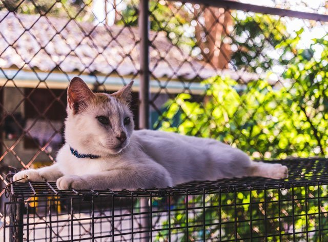 Katze im Animal Welfare auf Koh Lanta