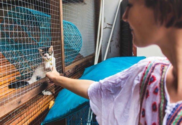 Kleine Katze in der Villa Molek auf Langkawi