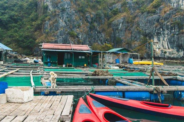 Kajak mieten in der Bay Tu Long Bay