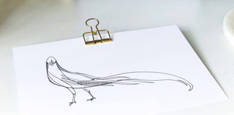 One Line Drawing mit Goldfasan von Clara Schicketanz