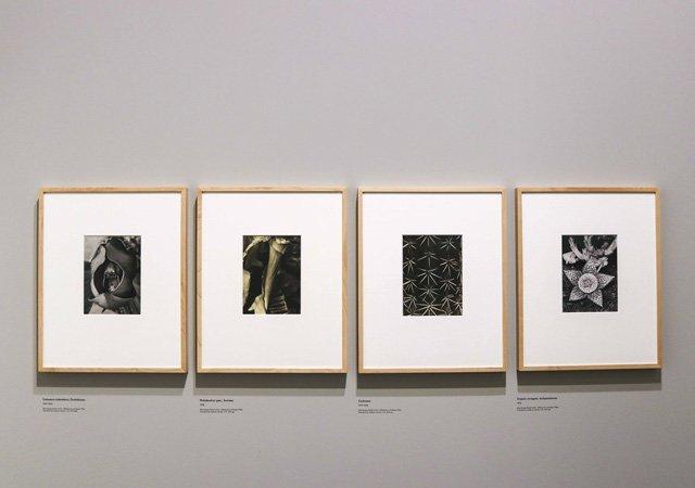 Fotos von Albert Renger-Patzsch im Jeu de Paume in Paris