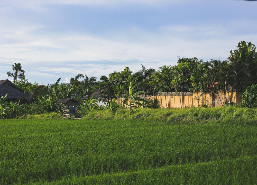 Grundstück mit Reisfeld